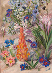 423. A Medley from Groot Post, South Africa. Fine Art Print by Marianne North