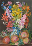 438. Wild Flowers of Ceres, South Africa. Poster Art Print by Marianne North