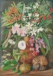 498. A Selection of Flowers. Wild and Cultivated, with Puzzle Nut, Mahe. Fine Art Print by Marianne North