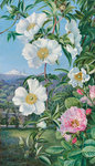 527. Cherokee Rose with the Peak of Teneriffe in the distance. botanical print by Marianne North