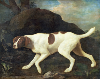 Phillis, a Pointer of Lord Clermont's, 1772 by George Stubbs - print