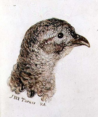 Hen Pheasant, from The Farnley Book of Birds, c.1816 by Joseph Mallord William Turner - print