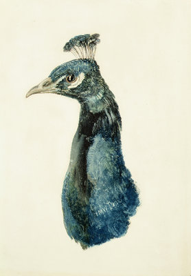 Peacock, from The Farnley Book of Birds, c.1816 by Joseph Mallord William Turner - print