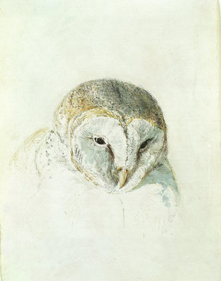 White Barn Owl, from The Farnley Book of Birds, c.1816 by Joseph Mallord William Turner - print