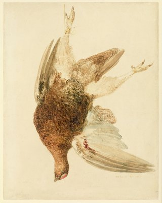Grouse, from The Farnely Book of Birds, c.1816 by Joseph Mallord William Turner - print