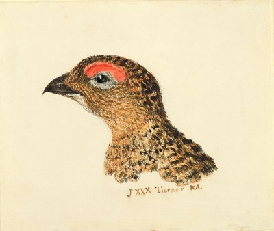 Head of Grouse, from The Farnley Book of Birds, c.1816 by Joseph Mallord William Turner - print