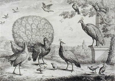 Group of Birds with Peacock by Francis Place - print