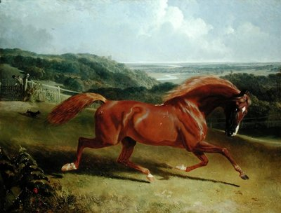Galloping Horse in a Landscape Wall Art & Canvas Prints by John Frederick Herring Snr