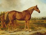 Silvertail, Portrait of a Horse Fine Art Print by John Frederick Herring Snr