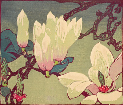 Magnolia Wall Art & Canvas Prints by Mabel Royds