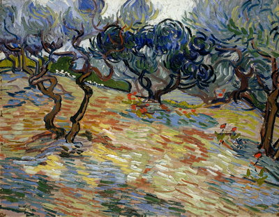 Olive Trees Fine Art Print by Vincent Van Gogh
