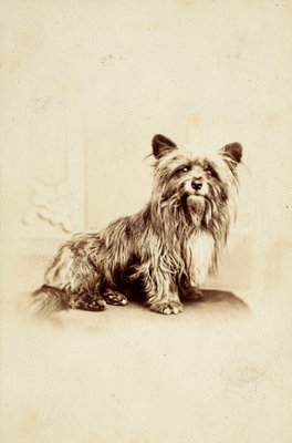 Greyfriars Bobby Fine Art Print by Unknown