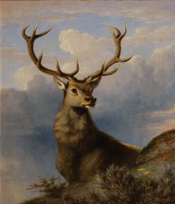The Monarch of the Glen 1861 Wall Art & Canvas Prints by James William Giles