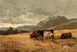 Highland Cattle in cornfield by John Smart - print