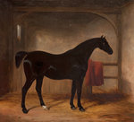 Black horse in a loose box, 1836 by Alfred Stevens - print