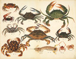Crustaceans by John Reeves - print