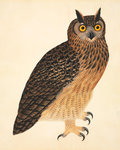 Eurasian eagle-owl by John Reeves - print