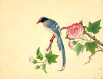 Red-billed blue magpie Fine Art Print by John Reeves