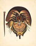 Horseshoe crab by John Reeves - print