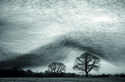 Starling wave Fine Art Print by Danny Green