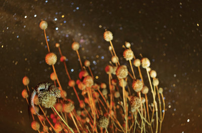 Spikes and stars Fine Art Print by Hannes Lochner