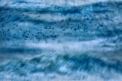 Murmuration in the storm Fine Art Print by Andrew Forsyth