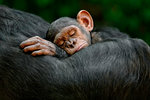 Sleeping infant by Cyril Ruoso - print