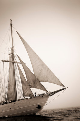 Four-masted schooner 'Creoula' during 50th Anniversary Tall Ships Race, Torbay 2006 by Richard Sibley - print
