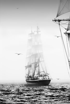 50th anniversary Tall Ships Race at Torbay, 2006 by Richard Sibley - print