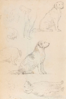 Studies of Nelson's dogs (verso) by Thomas Baxter - print