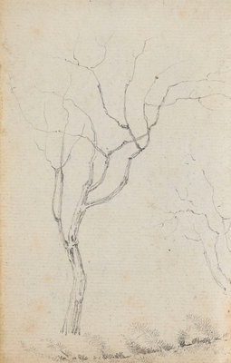 Study of small trees with low shrubs beneath them (verso) by Thomas Baxter - print
