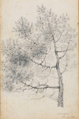 Study of a pine tree at Merton (recto) by Thomas Baxter - print