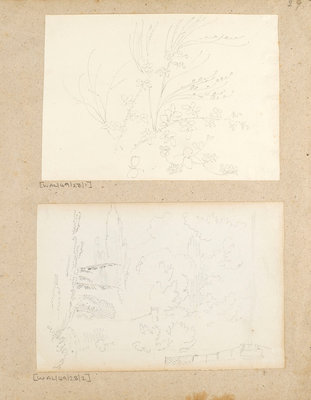 Studies of garden plants including rose foliage and honeysuckle by Thomas Baxter - print