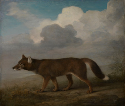 Portrait of a large dog (Dingo) by George Stubbs - print