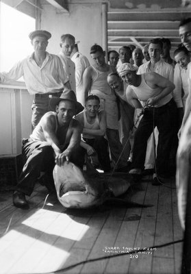 A group of off-duty crew from 'Carinthia' (1925) pose with a captured shark on deck by Marine Photo Service - print