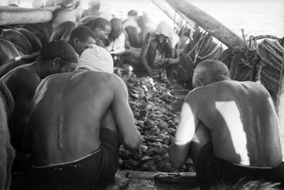 Divers looking through oysters by Alan Villiers - print