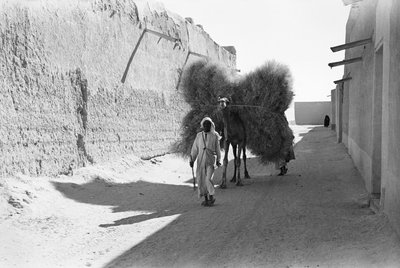 Camel-load of brushwood being transported, Kuwait City by Alan Villiers - print