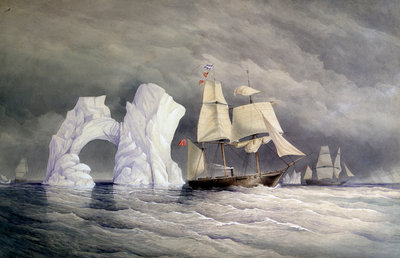 HMS 'Phoenix', 'Talbot' and 'Diligence' passing a remarkable iceberg by Edward Augustus Inglefield - print