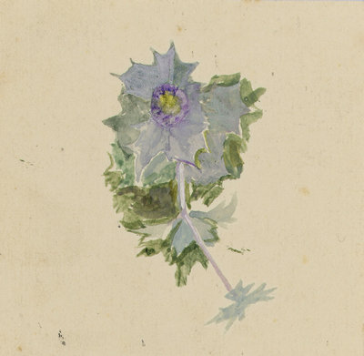 Blue flower with mauve centre, possibly sea holly by William Lionel Wyllie - print