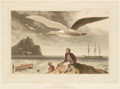 Albatross by Thomas Daniell - print