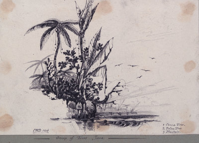Group of trees.... Java. 1. Cocoa Tree, 2. Palm Tree, 3. Plantain Fine Art Print by C. W. Browne