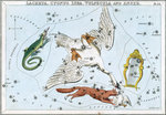 Constellation card, Urania's mirror, lacerta, cygnus, lyra, vulpecula and anser by Sidney Hall - print