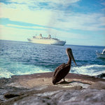 A pelican on the Galapagos Islands, with 'Kungsholm' (1966) in the background by Marine Photo Service - print
