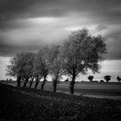Walsham Le Willows, Suffolk, 2009 Fine Art Print by Paul Cooklin