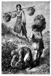 Peasants gathering roses in Roumelia Fine Art Print by French School