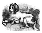 Old English hound Wall Art & Canvas Prints by George Adamson