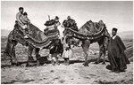 Pilgrims with their camels on their way to Karbala, Iraq Fine Art Print by Carl Haag