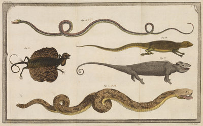 Five specimens of reptiles by T Cole - print