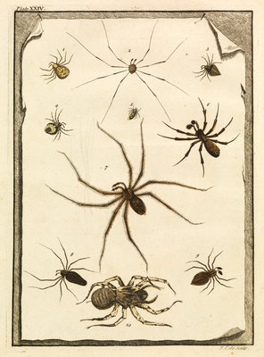 Ten specimens of spiders by T Cole - print
