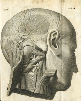 The anatomy of the neck and back of the head by unknown - print